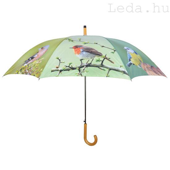Esernyő kismadarakkal