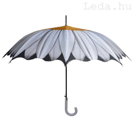 Margaréta esernyő