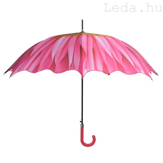 Gerbera Esernyő